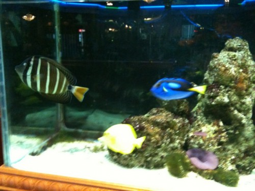 Fish Tanks, Feng Shui and Chinese Food in Dallas