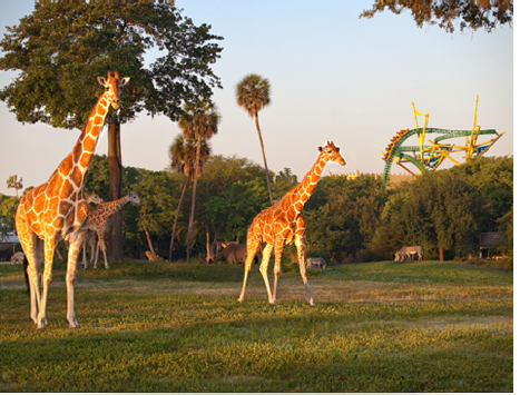 Busch Gardens Tampa Bay, Florida From The View of a Teen