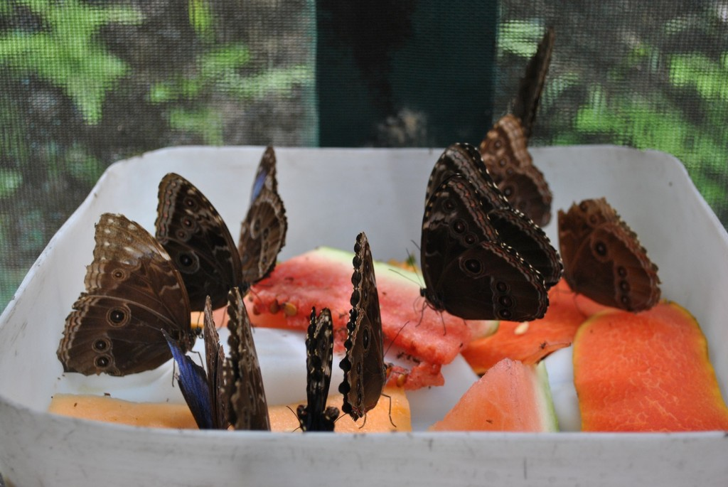 Kid-Friendly Butterfly Farm Adults Will Enjoy In Belize
