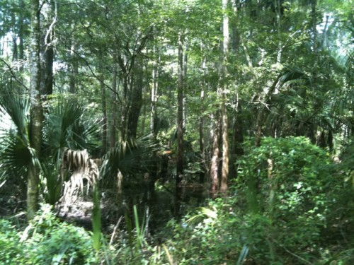 A Visit to Hillsborough River State Park, Florida