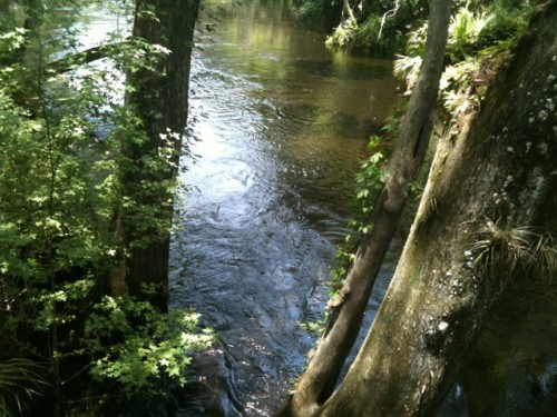 A visit to hillsborough river state park florida for Hillsborough river fishing