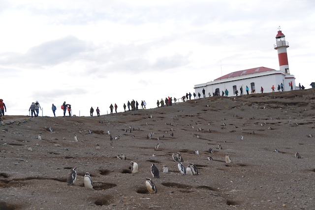 penguins 11