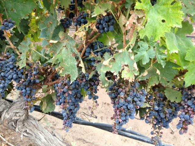 Lujan de Cuyo Wineries