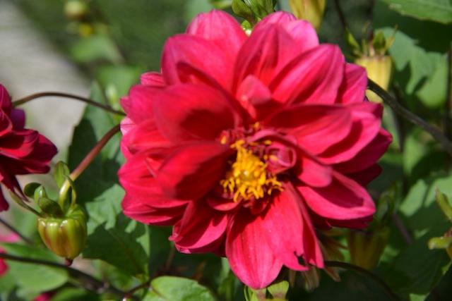 flower in Peulla