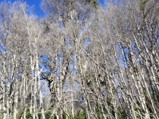 vegetation 2