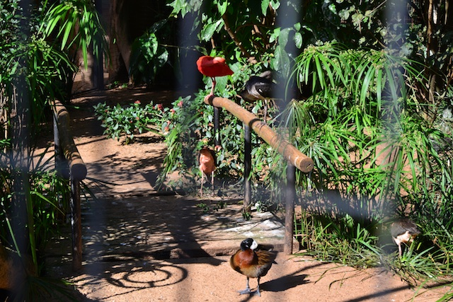 The Bird Park (Parque das Aves) In Iguazu Falls Brazil