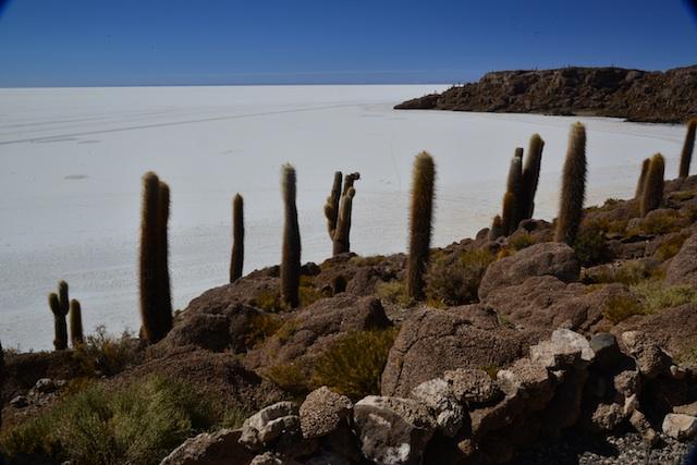 salt flats cacti