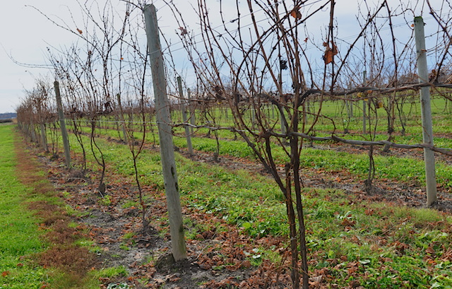 Cayuga Wine Trail At The Finger Lakes