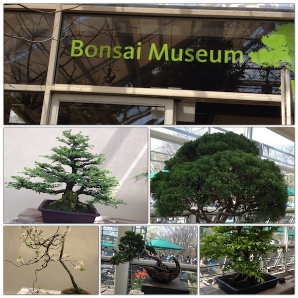 Bonsai Museum Brooklyn