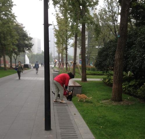 Lady feeding stray cats in the park