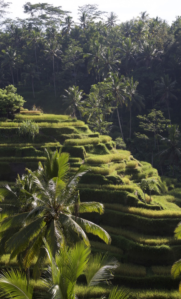 Tegalallang Rice Terrace Bali