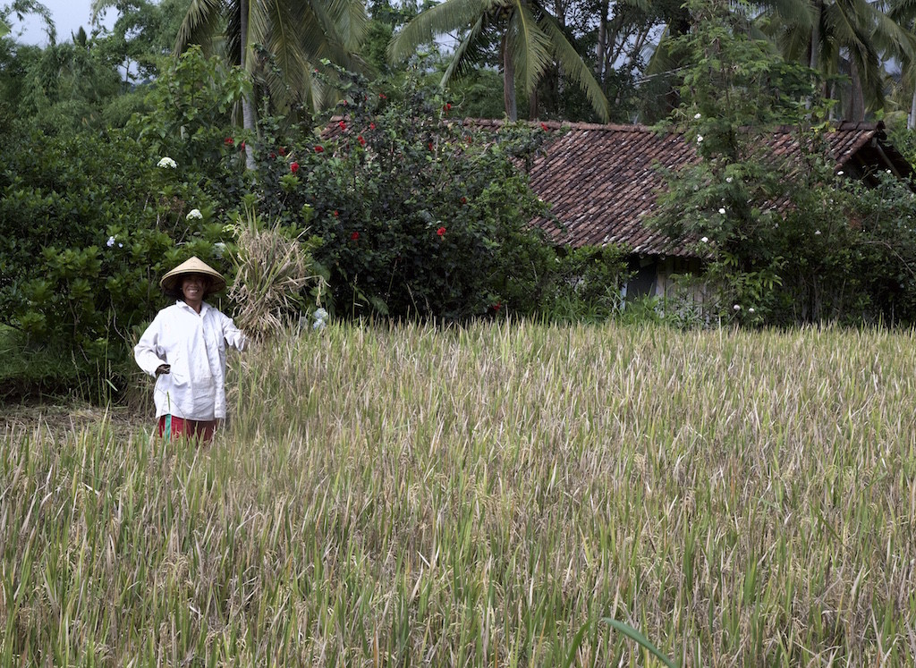 Hardworking farmer Bali