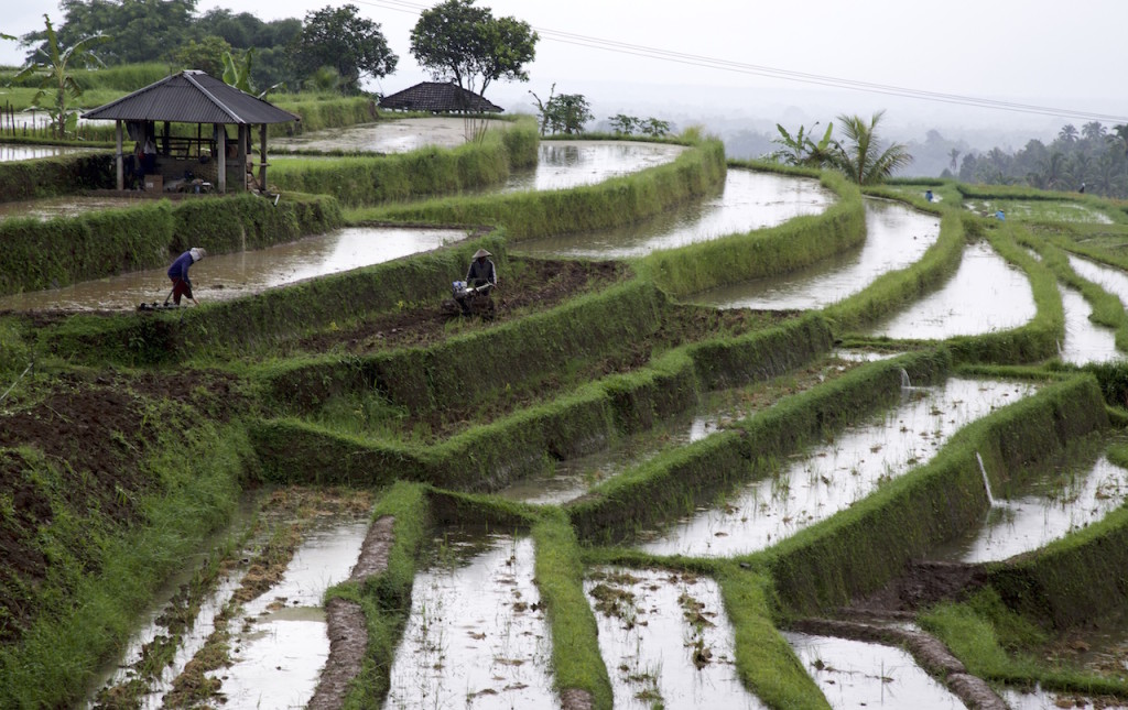3 rice terraces to visit in bali claudia looi for 100 rice terrace drive columbia sc