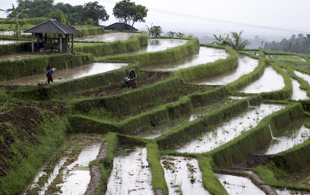 3 Rice Terraces to Visit in Bali