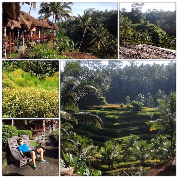 Tegalallang rice terraces