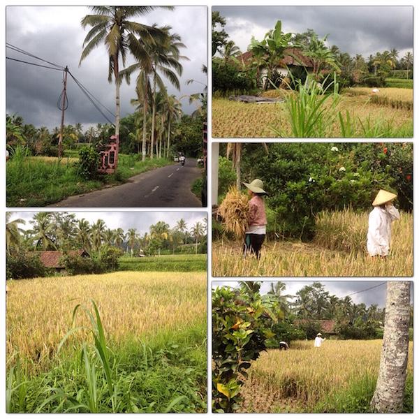 Scenes in central Bali
