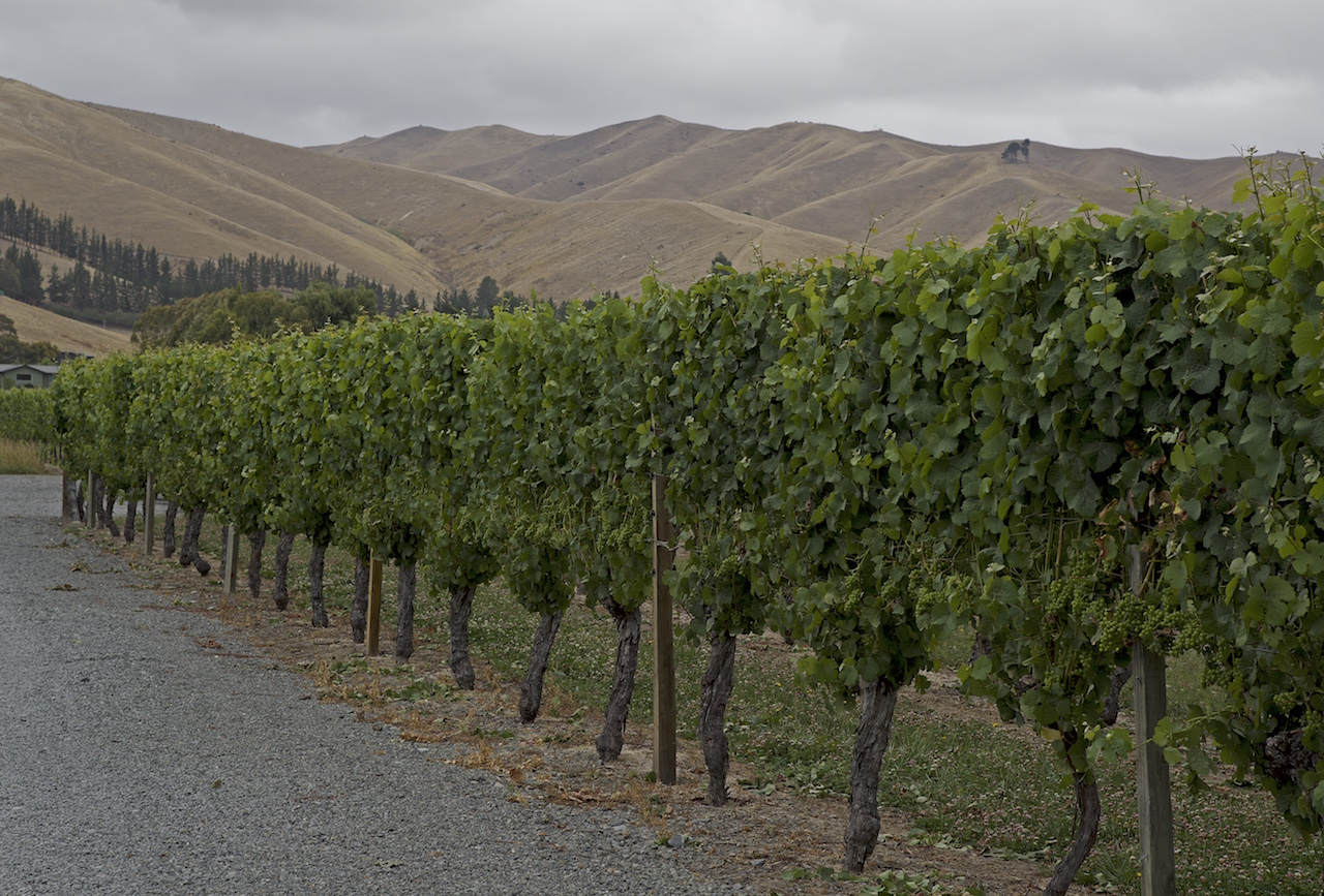 Lawson Winery in Blenheim NZ