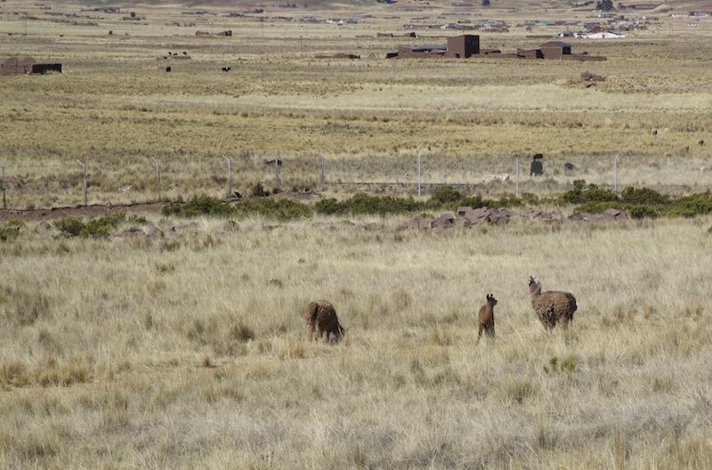 DSC_Tiwanaku Illama