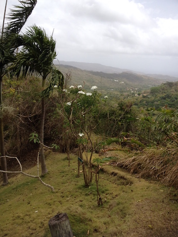 View from Flower Forest